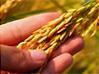 10 põllumajandussektorit toetavat trendi