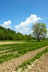 Põllumajandusmaa kasutamine Eestis